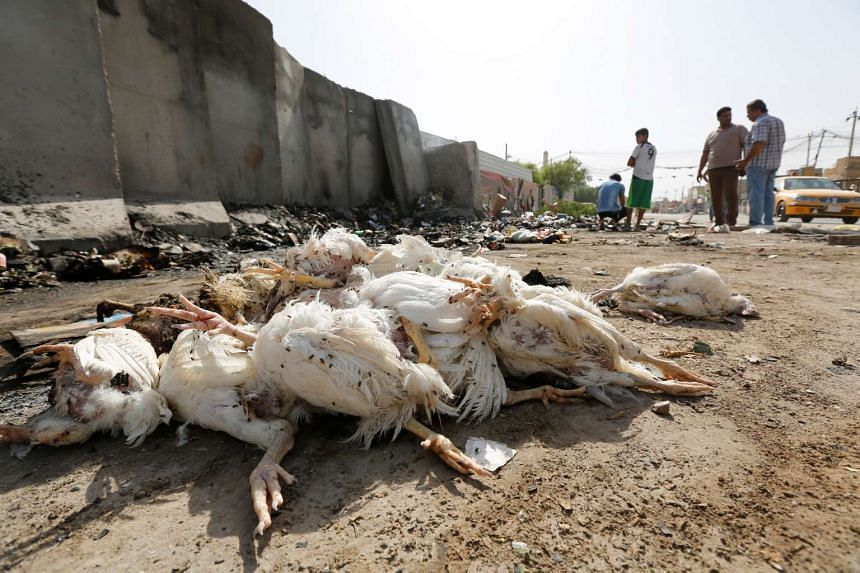 Dead chickens are seen at the site of a suicide bomb attack in the Amil district of southern Baghdad, Iraq on Oct 3, 2016.