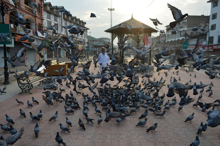 A man feeds pigeons in Srinagar, India. A pigeon has been detained by Indian police after it was found carrying a warning note to Prime Minister Narendra Modi.