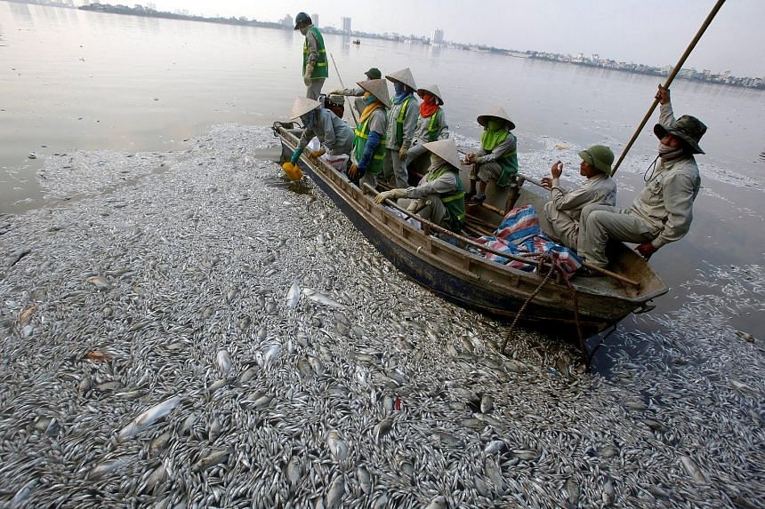 Workers collecting dead fish in the polluted West Lake in Hanoi yesterday.