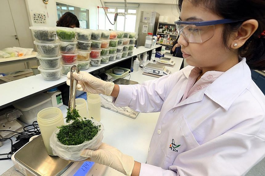 A member of the AVA's Pesticide Residues Section weighing a vegetable sample. Each day, 30 to 40 samples of food products are tested for hundreds of pesticides simultaneously at the lab. Food science experts also said that just because something is d