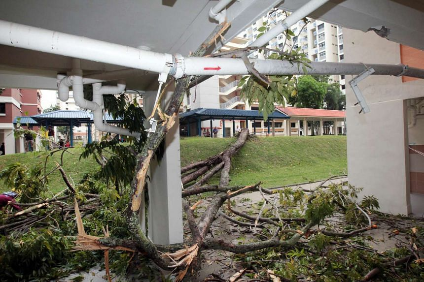 The fallen tree's branches shattered the windows of at least four units at Block 1, Holland Close.