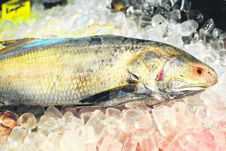 The Indian threadfin, also known as the ngoh hur, used in fish porridge.