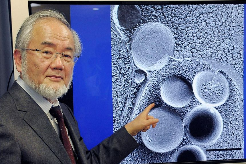 Dr Yoshinori Ohsumi's work on autophagy could lead to a better understanding and possible treatment of diseases such as cancer, diabetes and Parkinson's.