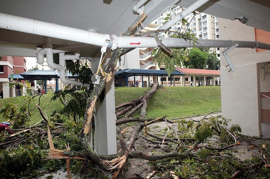 A tree came crashing down on a block of flats in Holland Close yesterday during a predawn thunderstorm, taking out windows from the third to sixth floors, and damaging a gas riser that served the block. Several residents of Block 1 were jolted awake