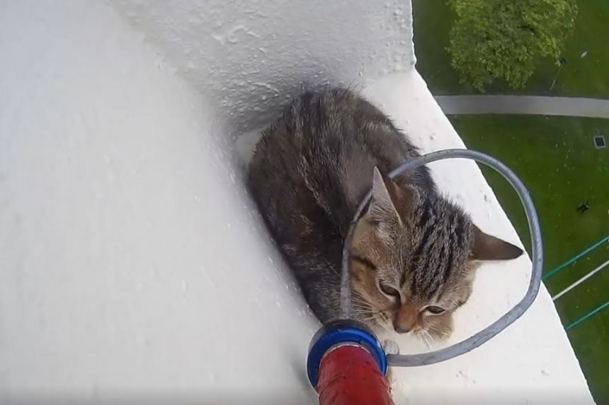 A kitten trapped on a 12th-storey ledge in Ang Mo Kio on Monday (Oct 3) was rescued by police officers and SPCA Singapore.