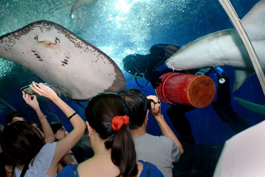 Visitors at the Underwater World Singapore (UWS), which has been closed since June 2016.