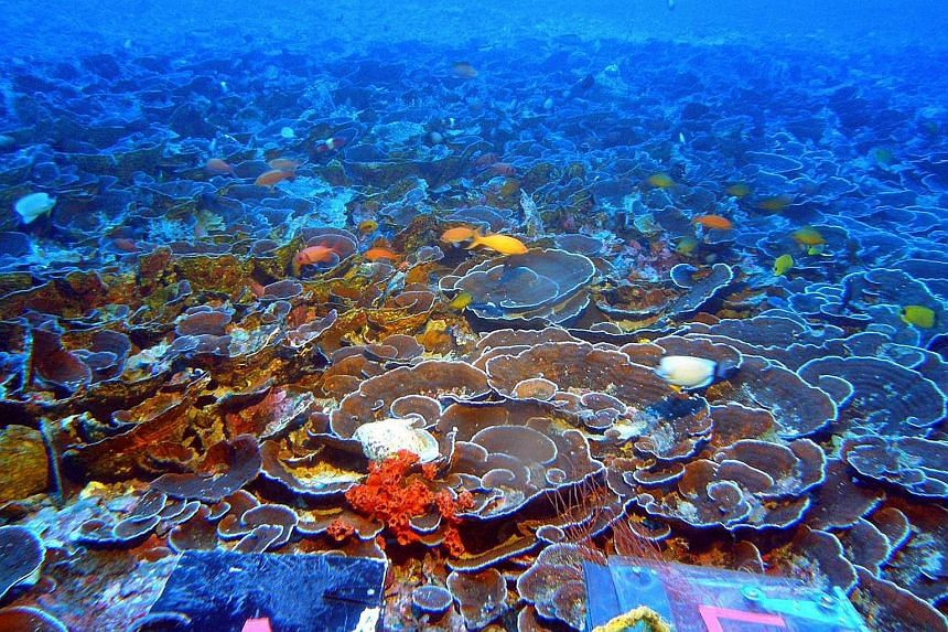 A mesophotic coral ecosystem at a depth of 70m in the Hawaiian island of Maui's Au'au Channel. Such an ecosystem is the deepest of the light-dependent coral reef communities and is usually found 30m to 152m below the surface. 	Scientists have discove
