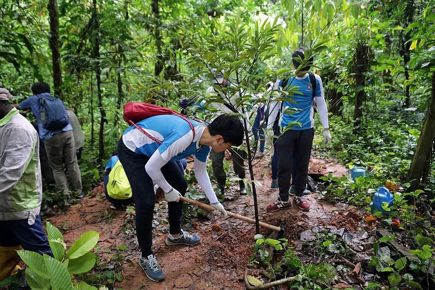 Clockwise from top: Students from Nanyang Junior College planting trees in the forest; remnants of a Hainan village that used to sit on part of what will be the Thomson Nature Park; and a green-eyed big whip snake that calls the forest home. The Thom