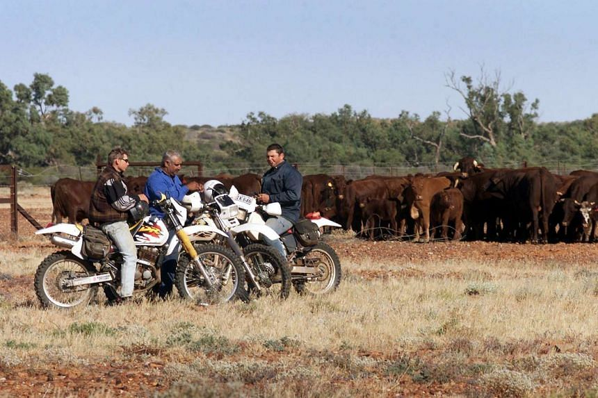 Workers on the Anna Creek cattle station, owned by cattle firm S. Kidman and Co., taking a break, in a June 20, 2000 file photo.