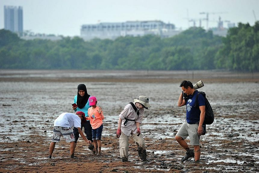 Volunteers Noraisah Arsad (second from left), with her kids Mohamad Raiyan Mohamad Rizal and Marsya Sorfina Mohamad Rizal, and Ms Elzbet Diaz de Leon with Mr Stephen Beng, chairman of NSS' Marine Conservation Group, rescuing horseshoe crabs at Mandai