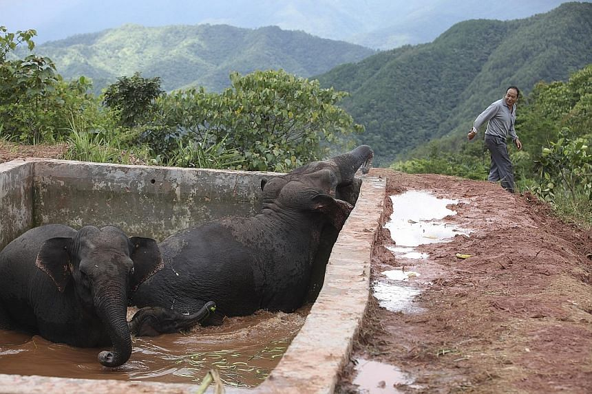 Three elephants trapped in a hilltop water storage tank in Yunnan province were finally freed on Tuesday, said Chinese state media. Forest rangers found the elephants - a calf and two adults - on Sunday, but heavy rains filled up the 5m-deep tank and