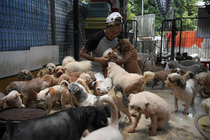 Mr Derrick Tan, president of Voices For Animals, one of the seven animal welfare groups located in the 14 farms in Pasir Ris. More than 1,000 dogs and about 800 cats housed in shelters will be moved out of Pasir Ris Farmway.