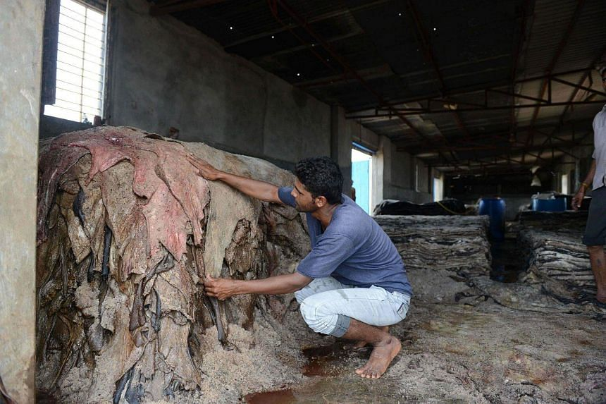 An Indian worker arranges skins removed from dead cattle at a facility on the outskirts of Wadhvan town, some 140km from Ahmedabad.