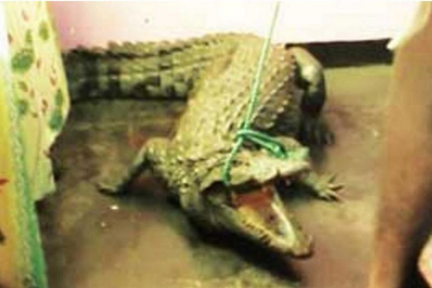 Police officers at Nochchiyagama station in Sri Lanka were sent scrambling when a crocodile broke into the office and spent the night there.