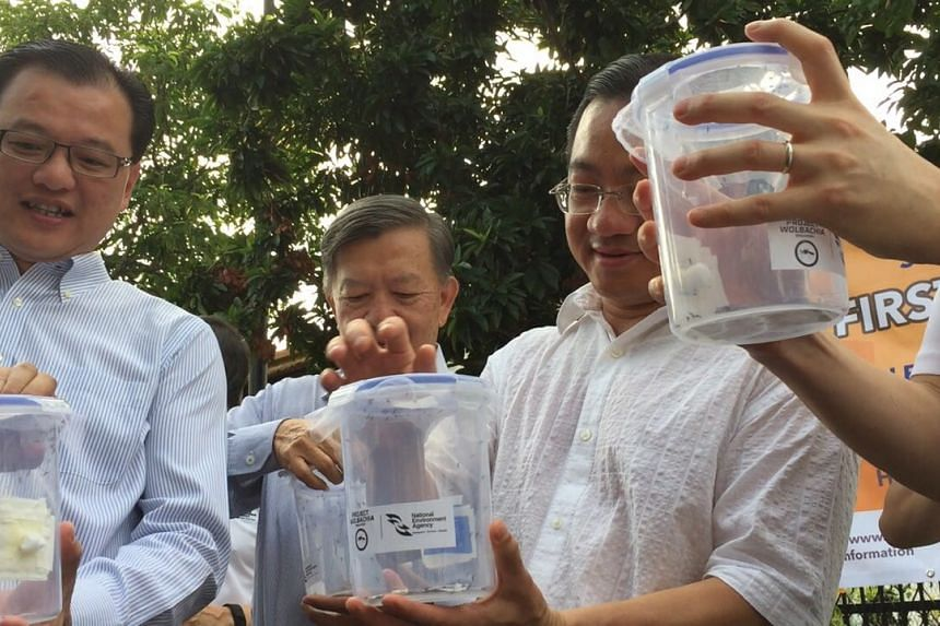 Mr Seah Kian Peng (second from right), MP for Marine Parade GRC, releasing the Wolbachia -infected male Aedes aegypti mosquitoes at Braddell Heights.