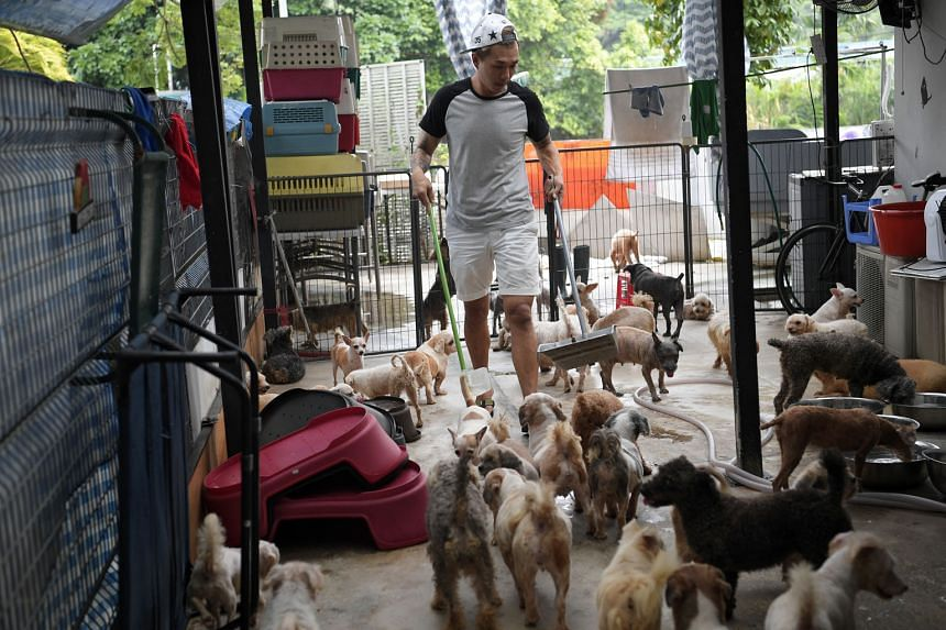 """Voices For Animals president Derrick Tan (above) said volunteers will be assured that their animals """"will not be left stranded"""" only when they are shown concrete plans. Tenants of Pasir Ris Farmway were told by the SLA in a letter on Oct 4 that the land m"""