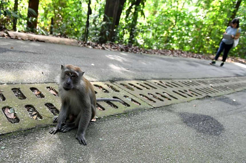 Bukit Timah Nature Reserve has fully reopened to the public on Saturday (Oct 22) after being closed for two years for restoration works.