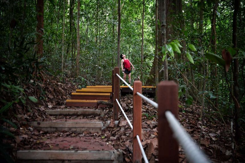 A man walks along the newly re-opened South View Path at Bukit Timah Nature Reserve on Oct 22, 2016.