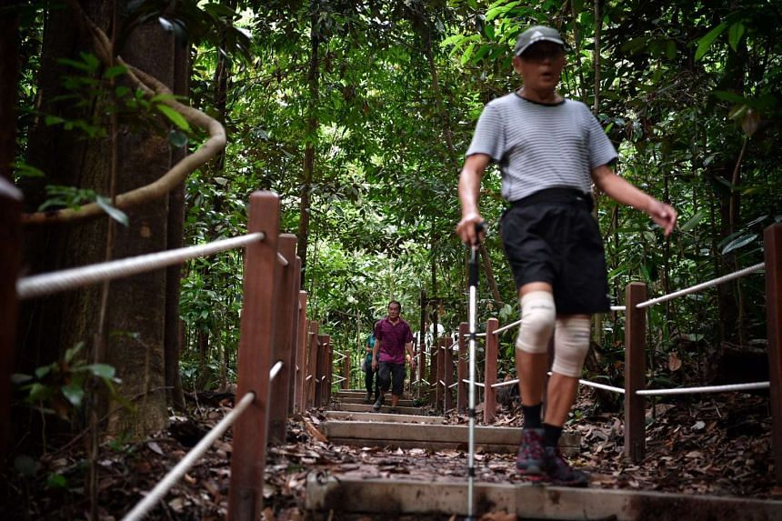 Men walk along the newly re-opened South View Path at Bukit Timah Nature Reserve on Oct 22, 2016.