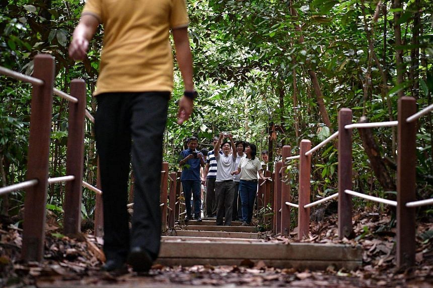 National Development Minister Lawrence Wong (centre), accompanied by Holland-Bukit Timah GRC MPs Vivian Balakrishnan (left) and Sim Ann (right), takes a picture of the newly reopened South View Path at Bukit Timah Nature Reserve.