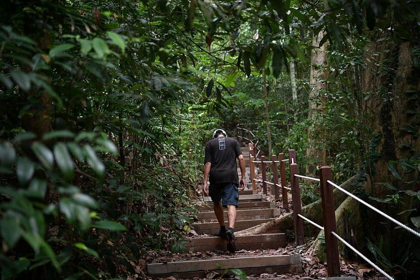 A man walks along the newly reopened South View Path at Bukit Timah Nature Reserve.