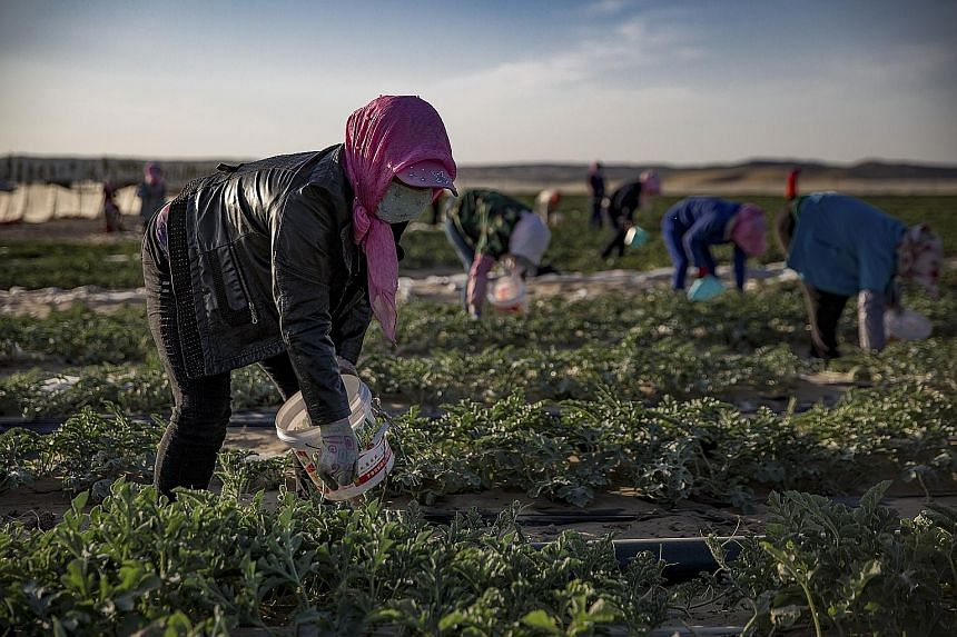 Above: Hui Muslim women working under a signboard promoting a plan for growing watermelons outside Miaomiao Lake Village in China's Ningxia Hui Autonomous Region. Left: Villagers, who were resettled under an environmental and poverty alleviation prog
