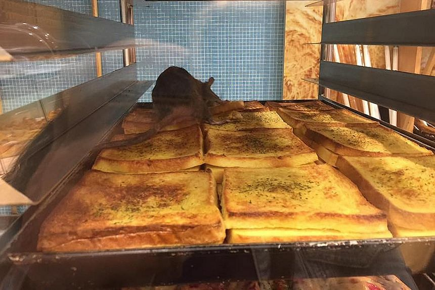 An outlet of the Komugi Bakery store in Kuala Lumpur has been ordered to close for an immediate clean-up after a rat was spotted on a tray of buttered toast. A photo of the incident had circulated on social media after a Facebook user uploaded it on