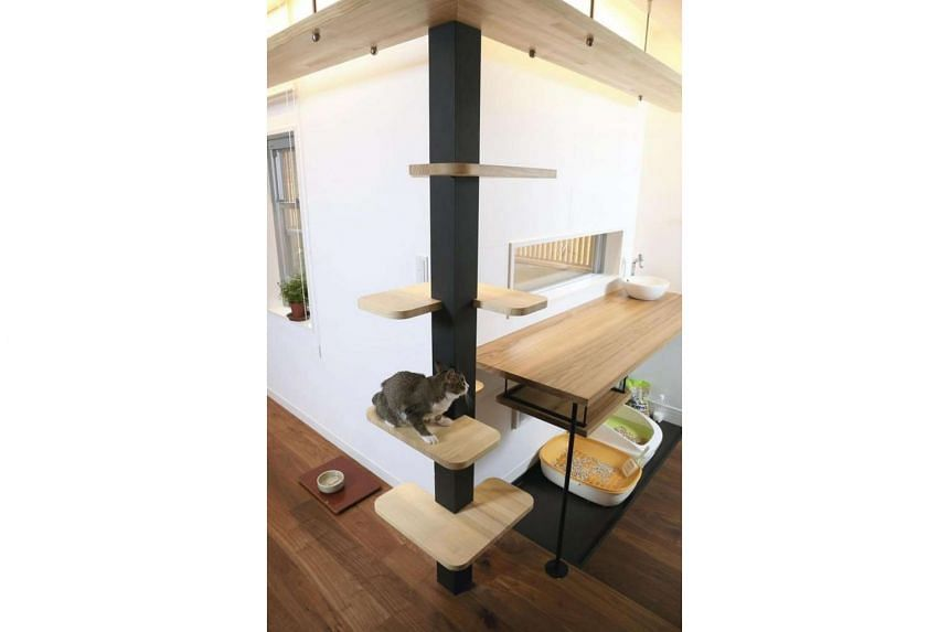 Chiaki Ono's house is filled with features to help cats live easily, such as pillars equipped with cat scratchers, and cat walkways.