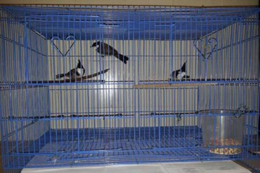 Muhammad Farhan Abdullah, 29, was sentenced on Wednesday (Oct 26) to three months' jail for importing three red-whiskered bulbul birds, and three months for subjecting the birds to unnecessary suffering or pain.