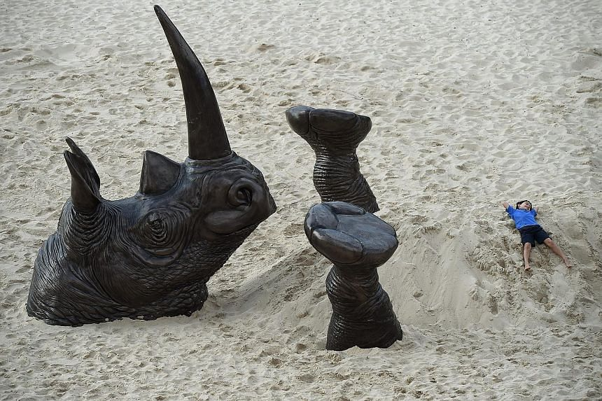 The Buried Rhino sculpture at the annual Sculpture By The Sea exhibition along the Bondi to Tamarama coastal walk in Sydney, Australia. The ever-expanding human species is eating, crowding and poisoning its planetary cohabitants, including rhinos, ti