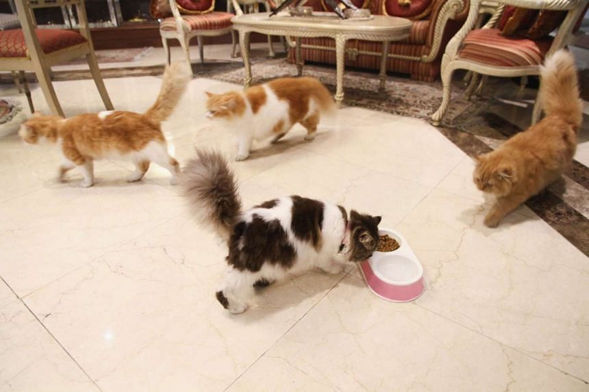 Malaysian Prime Minister Najib Razak, who is heading to China for a week in a closely-watched visit, has said his cats will be happily looking after his house while he is away.