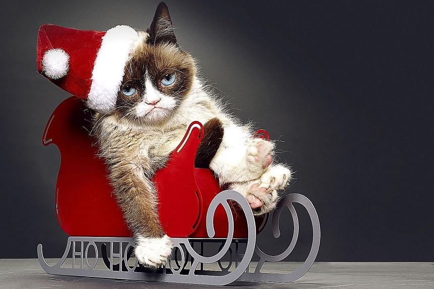 Many A-list Internet felines, like Grumpy Cat, seen here in Grumpy Cat's Worst Christmas Ever, have oral deformities that make them seem to smile or grimace, as if they are furry emoticons.
