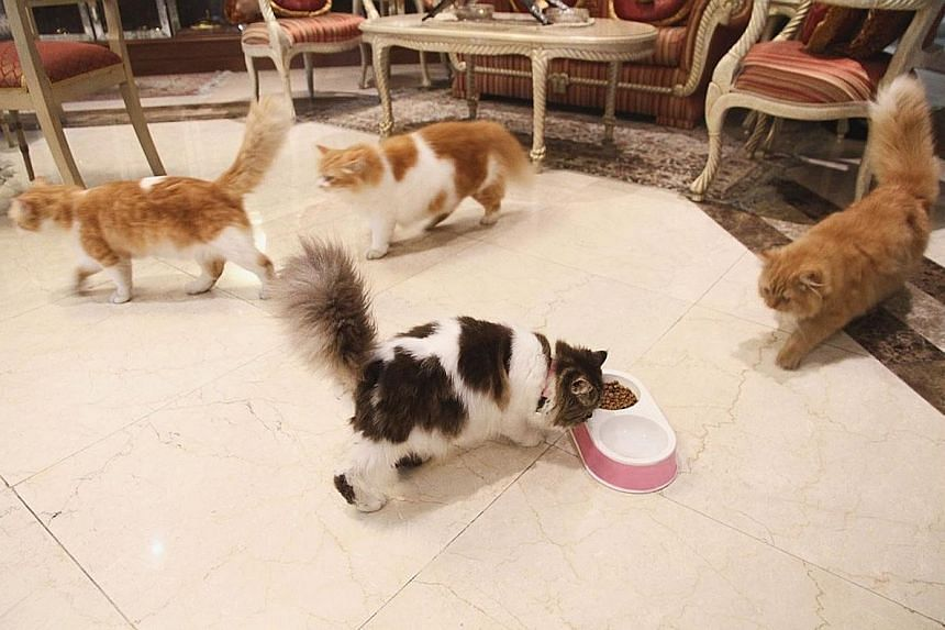 A photo from Mr Najib's Facebook page of his four cats in what appears to be his living room. He is visiting China at the invitation of Chinese Premier Li Keqiang.