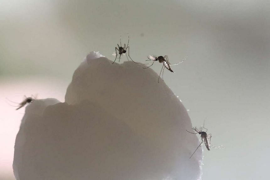 The National Environment Agency has urged the public to remain vigilant to help curb the Aedes mosquito population.