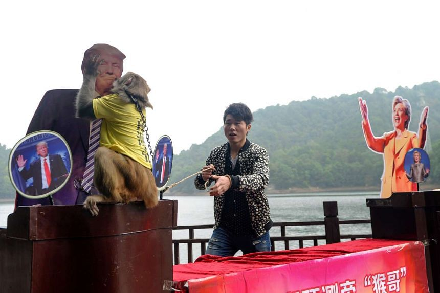 "A Chinese monkey described as the ""king of prophets"" kisses the cardboard cutout of US Presidential candidate Donald Trump on Nov 3, 2016."