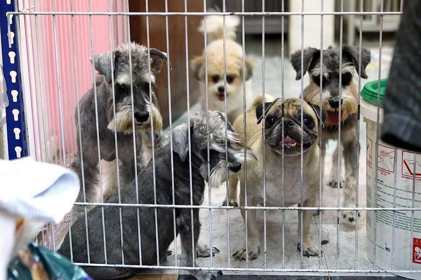 Under the revised licensing regime by The Agri-Food & Veterinary Authority of Singapore (AVA), all dogs intended for sale by pet businesses must be licensed before they are sold.