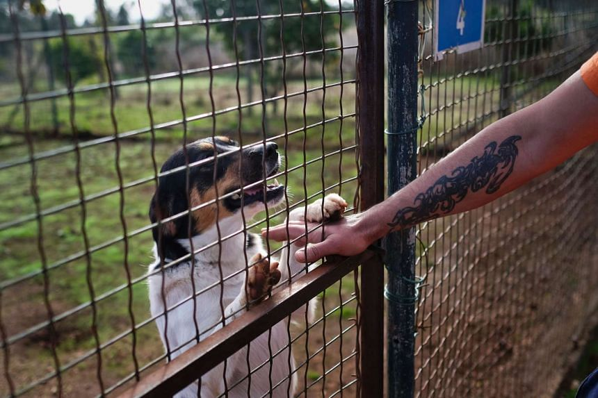 A prisoner at the high security prison of Monsanto touches a dog at the prison's dog kennel in Lisbon on Oct 24, 2016.