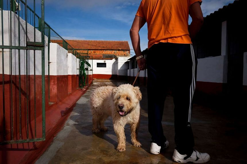 A prisoner at the high security prison of Monsanto holds a dog at the prison's dog kennel in Lisbon on Oct 24, 2016.