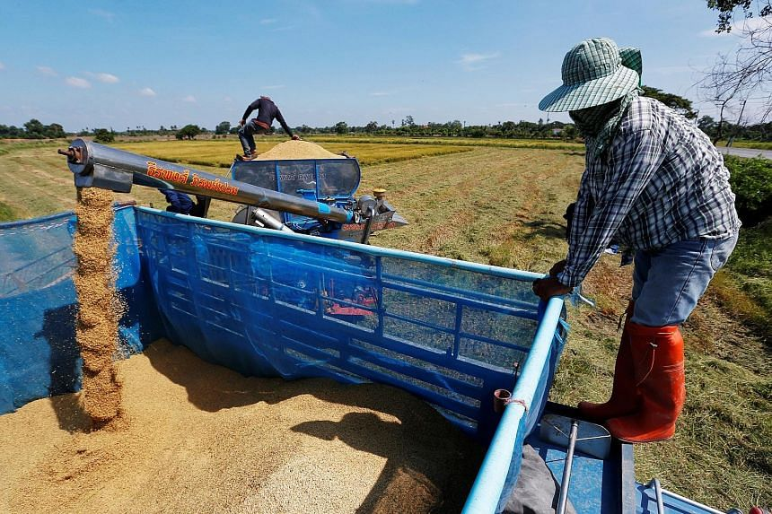 With the harvest season on and rice prices at a 13-month low, the military government last week offered loans worth US$1.3 billion (S$1.8 billion) to jasmine rice farmers, on the condition that they store the grain for six months to slow down market