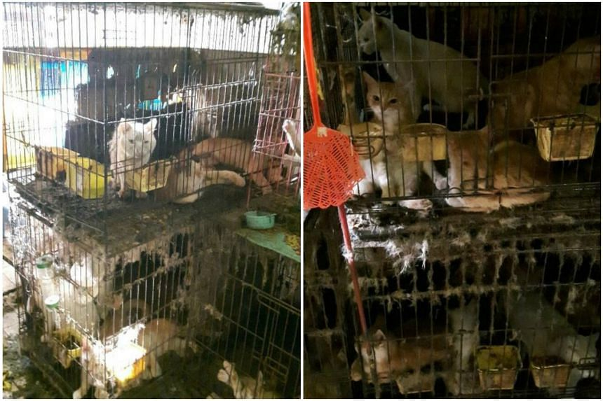 The 39 cats were found by AVA officers kept in dirty cages in the flat in Yishun.