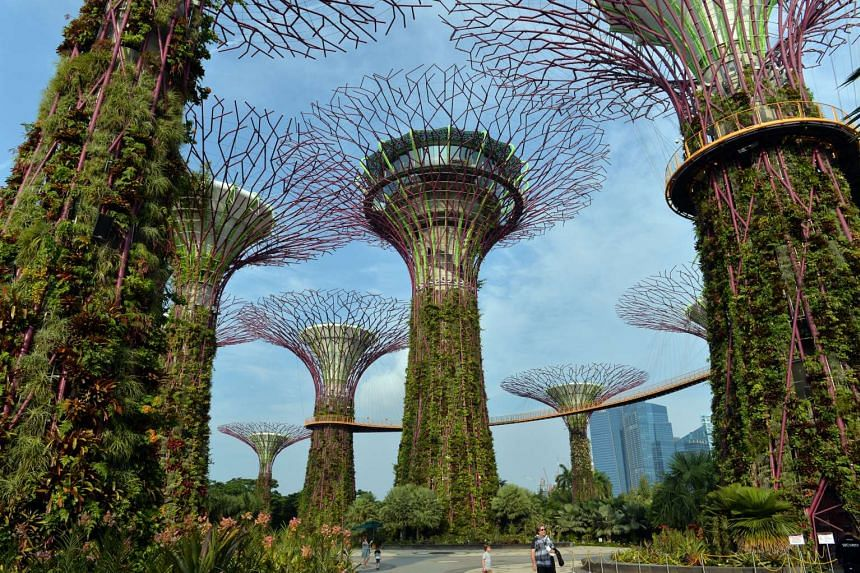 The trees at the Supertree Grove in Gardens by the Bay.