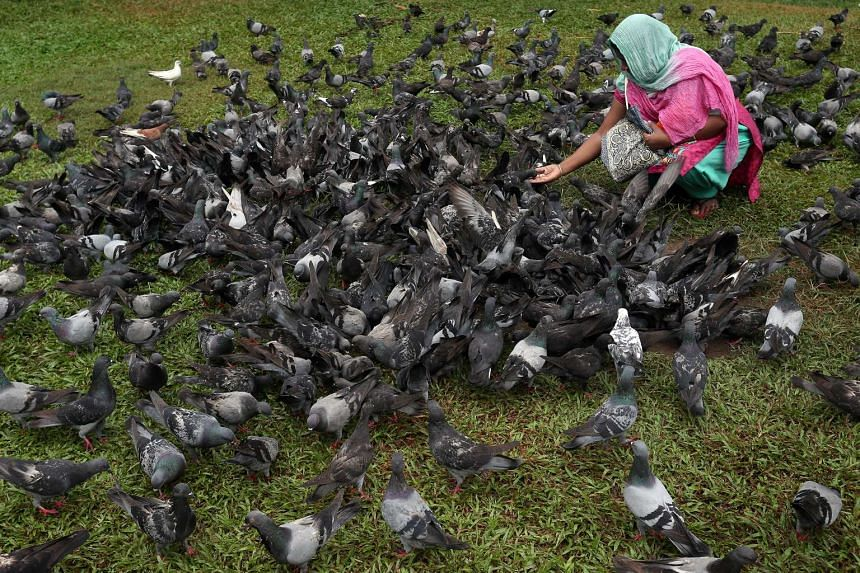 A corn-based feed containing a drug called nicarbazin has helped to reduce the pigeon population outside Masjid Haji Muhammad Salleh mosque by 60 to 70 per cent.