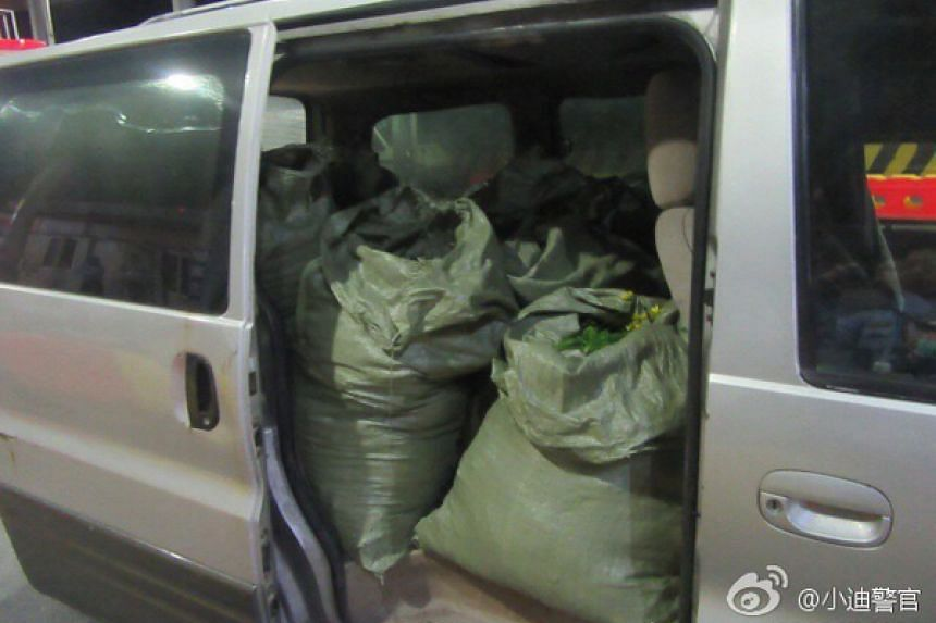 On Oct 25, the police caught the two suspects red-handed with sacks of yellow chrysanthemums in their van.