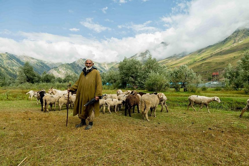The travels of photographer Laxmi Kaul have given her opportunities to capture scenes in Kashmir such as a shepherd taking his sheep out to graze (above).