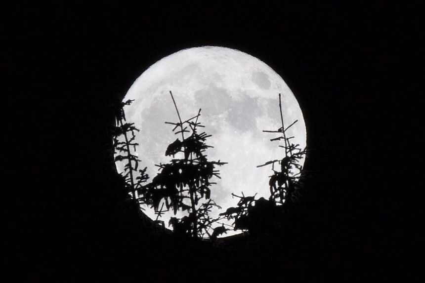 The supermoon rises behind firs near Gryon, Switzerland, on Nov 14, 2016.