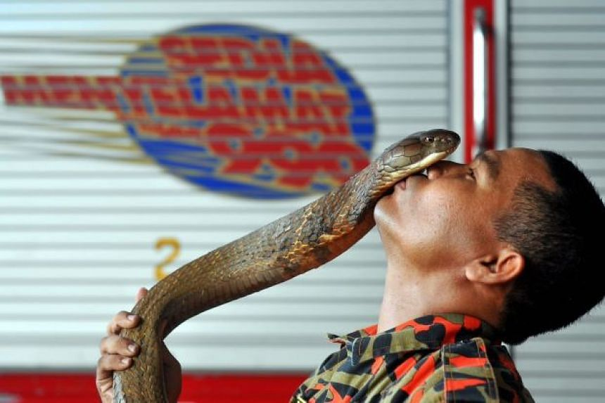 Malaysian firefighter Abu Zarin Hussin with his pet snake.