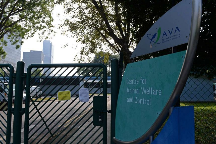 The Agri-Food and Veterinary Authority of Singapore's (AVA) Centre for Animal Welfare and Control at Pasir Panjang Road.