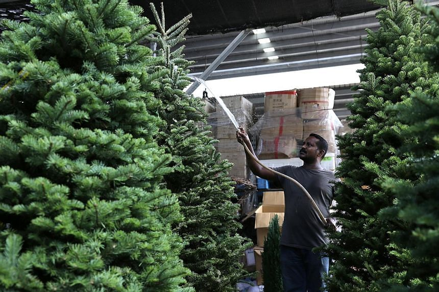 A worker at Sing See Soon Floral & Landscape in Punggol East watering Christmas trees. The trees sold to hotels and malls can measure up to 3.7m.