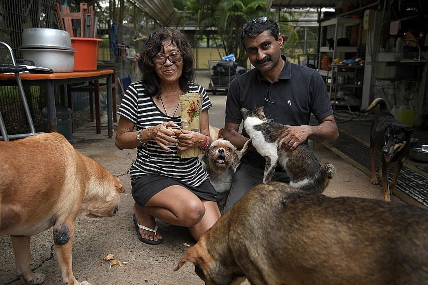 Ms Cathy Strong (left) and Mr Mohan Div of the Animal Lovers League are seen here at the shelter last month. The shelter is one of around 40 groups and pet farms that welcome the Government's unprecedented move to build new facilities for them.