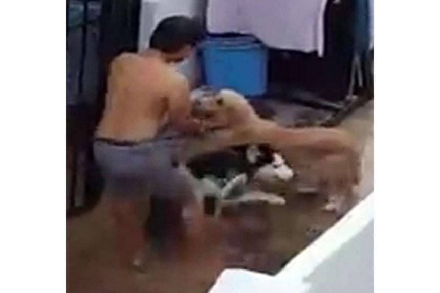 In a video posted on Facebook, dog fosterer and rescuer Alan Chiam is seen kicking a black-and-white husky on a leash before lifting it by its neck.